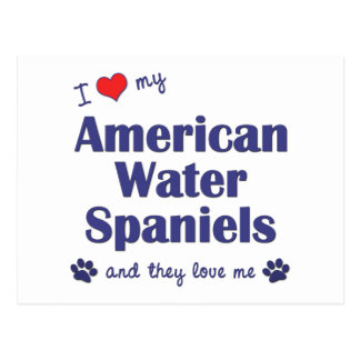 I Love My American Water Spaniels (Multiple Dogs) Postcard