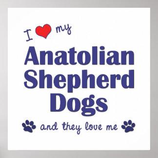 I Love My Anatolian Shepherd Dogs (Multiple Dogs) Poster