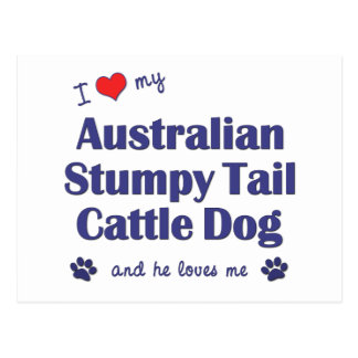 I Love My Aust. Stumpy Tail Cattle Dog (Male Dog) Postcard