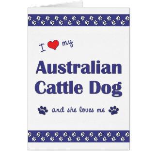 I Love My Australian Cattle Dog (Female Dog) Greeting Card