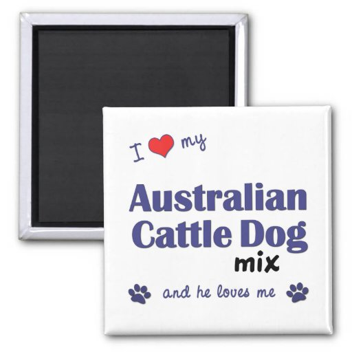 I Love My Australian Cattle Dog Mix (Male Dog) 2 Inch Square Magnet