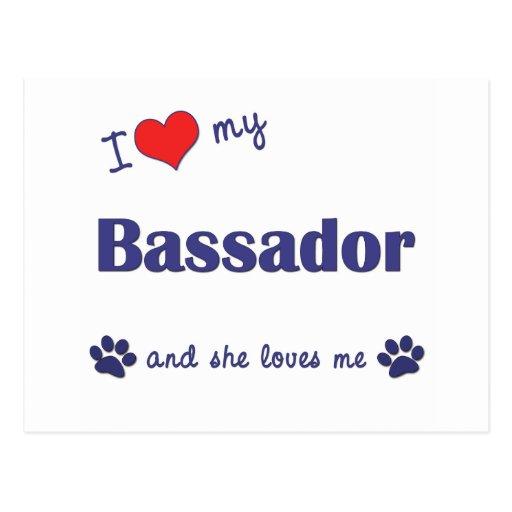 I Love My Bassador (Female Dog) Postcard