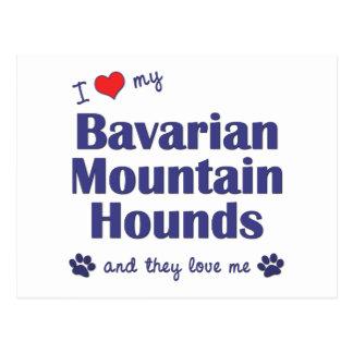 I Love My Bavarian Mountain Hounds (Multiple Dogs) Postcard