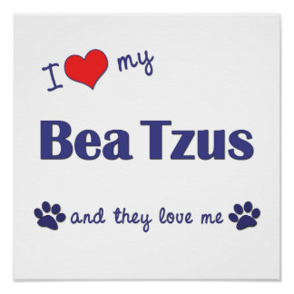 I Love My Bea Tzus (Multiple Dogs) Poster Print