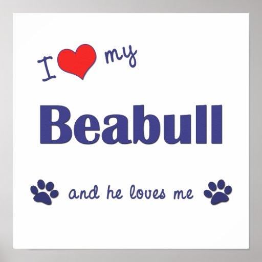 I Love My Beabull (Male Dog) Poster Print
