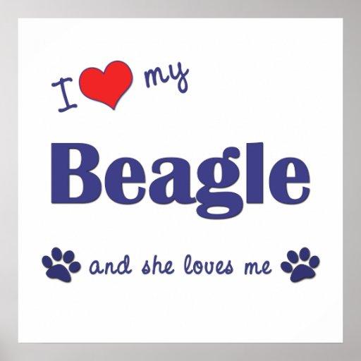 I Love My Beagle (Female Dog) Posters