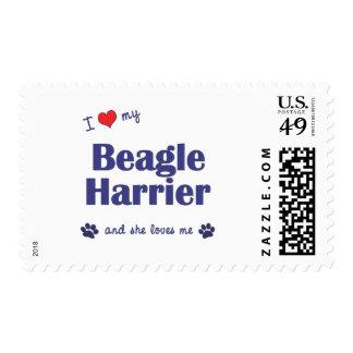 I Love My Beagle Harrier (Female Dog) Postage Stamps