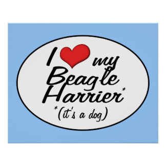 I Love My Beagle Harrier (It's a Dog) Poster