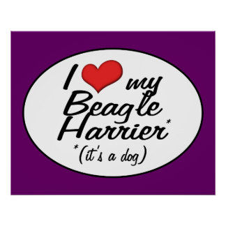 I Love My Beagle Harrier (It's a Dog) Posters