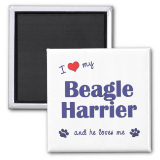 I Love My Beagle Harrier (Male Dog) 2 Inch Square Magnet