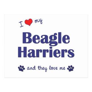 I Love My Beagle Harriers (Multiple Dogs) Postcard