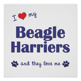 I Love My Beagle Harriers (Multiple Dogs) Print