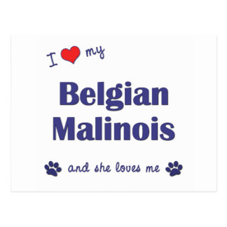 I Love My Belgian Malinois (Female Dog) Postcard