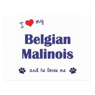 I Love My Belgian Malinois (Male Dog) Postcard