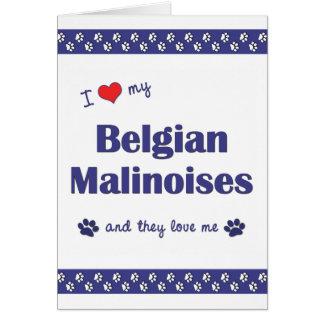 I Love My Belgian Malinoises (Multiple Dogs) Card