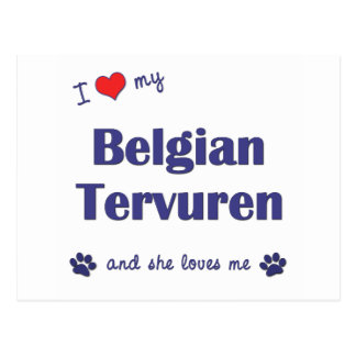 I Love My Belgian Tervuren (Female Dog) Postcard