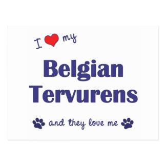 I Love My Belgian Tervurens (Multiple Dogs) Postcard