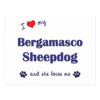 I Love My Bergamasco Sheepdog (Female Dog) Post Cards