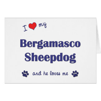 I Love My Bergamasco Sheepdog (Male Dog) Greeting Cards
