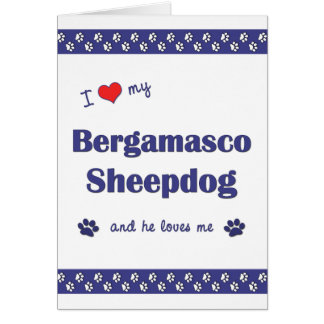 I Love My Bergamasco Sheepdog (Male Dog) Cards