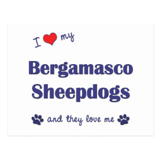 I Love My Bergamasco Sheepdogs (Multiple Dogs) Postcards
