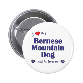 I Love My Bernese Mountain Dog (Male Dog) Pinback Button