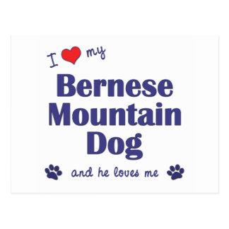 I Love My Bernese Mountain Dog (Male Dog) Postcard