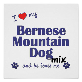 I Love My Bernese Mountain Dog Mix (He) Poster