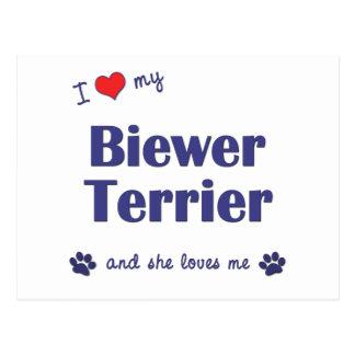 I Love My Biewer Terrier (Female Dog) Postcard