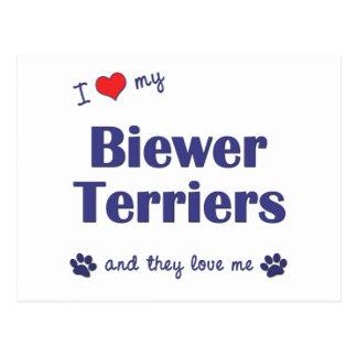I Love My Biewer Terriers (Multiple Dogs) Postcard