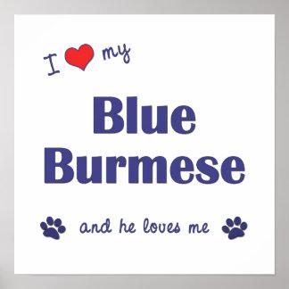 I Love My Blue Burmese (Male Cat) Posters
