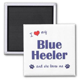I Love My Blue Heeler (Female Dog) Magnet