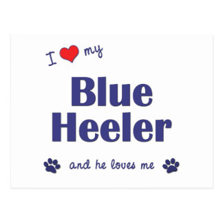 I Love My Blue Heeler (Male Dog) Postcard