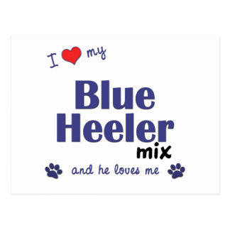 I Love My Blue Heeler Mix (Male Dog) Postcard