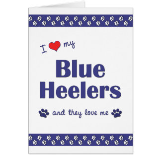 I Love My Blue Heelers (Multiple Dogs) Card