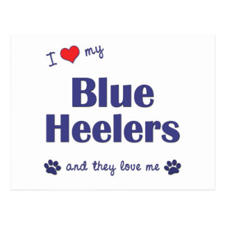 I Love My Blue Heelers (Multiple Dogs) Postcard