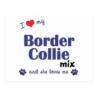 I Love My Border Collie Mix (Female Dog) Postcard
