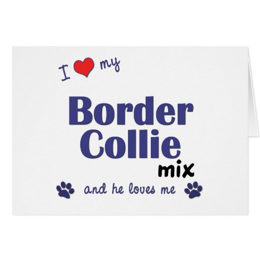 I Love My Border Collie Mix (Male Dog) Greeting Card