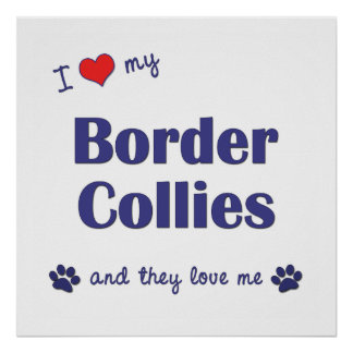 I Love My Border Collies Multiple Dogs Posters