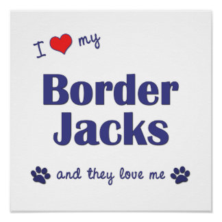 I Love My Border Jacks Multiple Dogs Poster