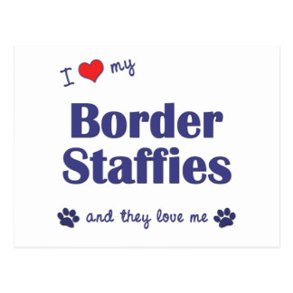 I Love My Border Staffies (Multiple Dogs) Postcard