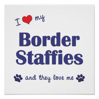 I Love My Border Staffies (Multiple Dogs) Poster