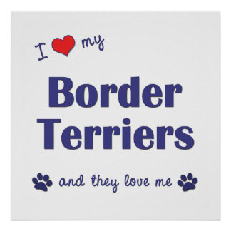 I Love My Border Terriers Multiple Dogs Poster