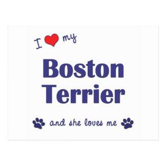I Love My Boston Terrier (Female Dog) Postcard