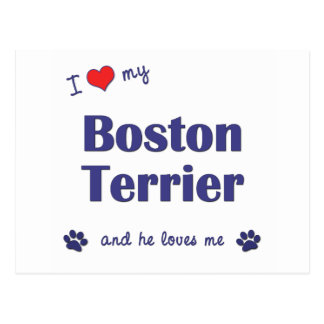 I Love My Boston Terrier (Male Dog) Postcard