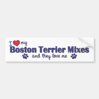 I Love My Boston Terriers (Multiple Dogs) Bumper Stickers