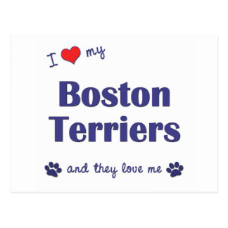 I Love My Boston Terriers (Multiple Dogs) Postcard