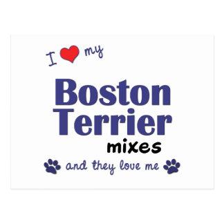 I Love My Boston Terriers (Multiple Dogs) Postcard