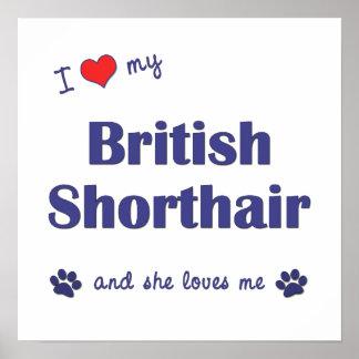 I Love My British Shorthair (Female Cat) Posters