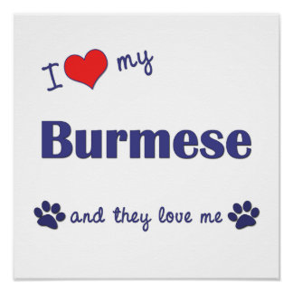 I Love My Burmese (Multiple Cats) Posters